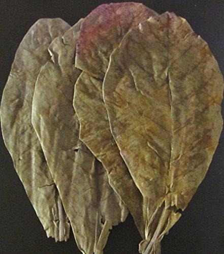 garnelenshop24de SMJS-Cambodia Lot de 3 feuilles de badamier 10-20 cm