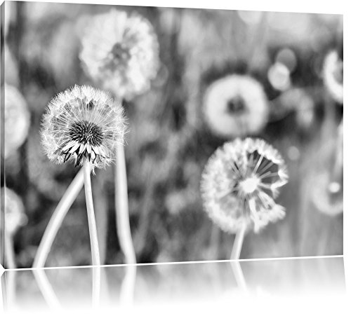 Pixxprint Romantische Pusteblumen / 100x70cm Leinwandbild bespannt auf Holzrahmen/Wandbild Kunstdruck Dekoration