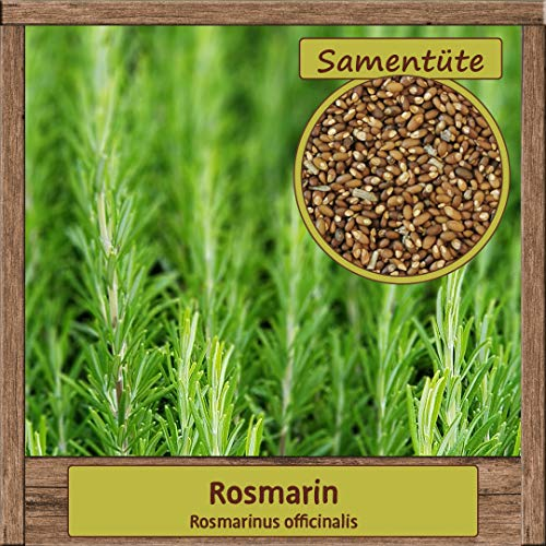100 Hochwertige Rosmarin-Samen Rosmarinus officinalis Brautkraut Saatgut mehrjährig Herkunftsland Italien