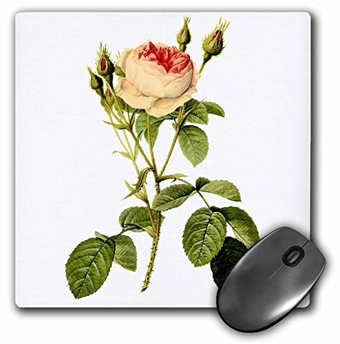 3dRose Dooni Designs Redoute Fruits and Flowers - Redoute Vintage Watercolor Floral Double Moss Rose Rosa Muscosa Multiplex - Mousepad (mp_106767_1)