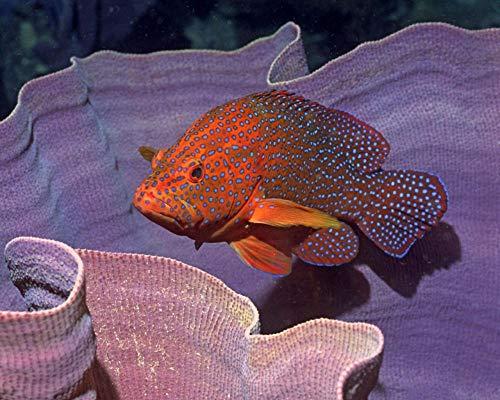 Rompecabezas de 1000 piezas, bacalao de coral en el oído de madera, juego de rompecabezas para adultos y niños, regalos, decoraciones