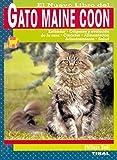 Gato Maine Coon, El