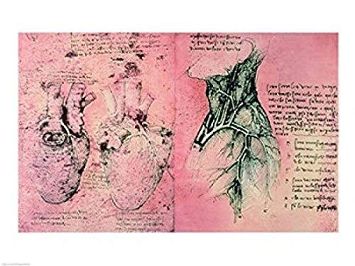 The Poster Corp Leonardo Da Vinci – Anatomische Zeichnung der Herzen und den Blutgefäßen Kunstdruck (60,96 x 45,72 cm)