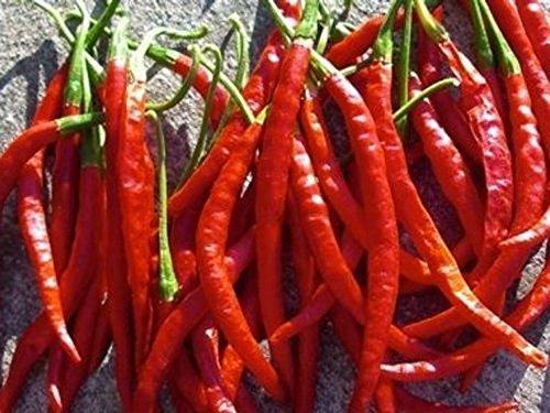 De Arbol - rotes, scharfes Chili - 20 Samen