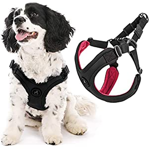 Gooby Dog Harness – Escape Free Sport Patented Step-in Neoprene Small Dog Harness – Perfect on The Go Four-Point Adjustable Harness for Small Dogs or Cat Harness