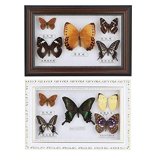 AUNMAS Exquisite Schmetterlinge Insekt Probe Bilderrahmen Handwerk Display Fotorahmen Geburtstagsgeschenk Wohnkultur (2#)