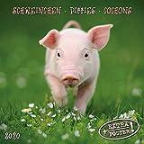 Piggies/Schweinchen 2020: Kalender 2020 (Artwork Edition)