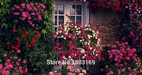 20 Couleurs graines Petunia, graines de Charme Pétunia Fleur, Petunia graines en pot, Bonsai balcon fleurs - 1000 pcs / sac