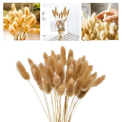 Vockvic 60 Pièces Fleurs Séchées Naturelles Herbe de Pampa, d'herbe Queue de Lapin Bouquet de Fleurs pour Chambre à Coucher Intérieur la Décoration de la Maison de Mariage