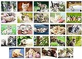 Edition Seidel Set 24 Postkarten Katzen Kätzchen Tiere (Katzen, 24 Karten)