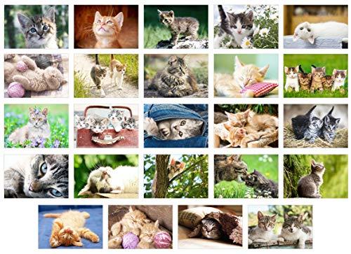 Edition Seidel Set 24 Postkarten Katzen Kätzchen Tiere (20371)