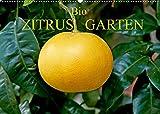 Bio Zitrus Garten (Wandkalender 2022 DIN A2 quer)
