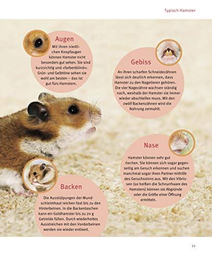 Hamster: Pflege-Einmaleins für kleine Solokünstler (GU Tierratgeber) - 9