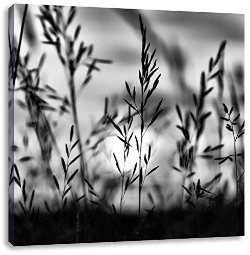 Gras bij zonsondergangCanvas Foto Plein | Maat: 40x40 cm | Wanddecoraties | Kunstdruk | Volledig gemonteerd