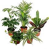 Exotenherz - Großes Zimmerpflanzen Set mit 5 Pflanzen - 9cm