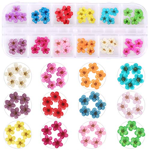 1 Box Dried Flowers for Nail Art, KISSBUTY 12 Colors Dry Flowers Mini Real Natural Flowers Nail Art Supplies 3D Applique Nail Decoration Sticker for Tips Manicure Decor (Daffodils Flowers)