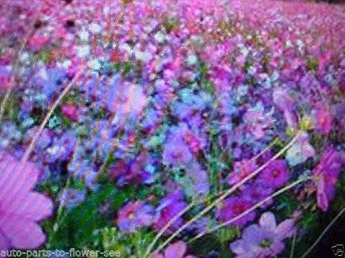 GETSO 1/32 Pfund schweren SCHÜTTGUT NIEDRIG Bodendecker Blumensamen Mix