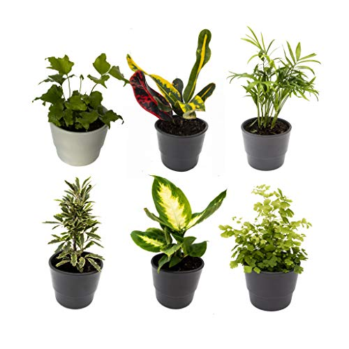 6 Indoor House Plants in 9cm Pots, Mix of Real Plants for Indoors. Ideal...
