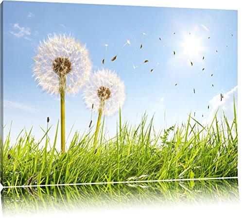 Pusteblumen auf sonniger Frühlingswiese Format: 120x80 auf Leinwand, XXL riesige Bilder fertig gerahmt mit Keilrahmen, Kunstdruck auf Wandbild mit Rahmen, günstiger als...