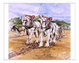 10x8 Print of Shire horse team during Ploughing Match (4397243)