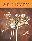 "2020 Diary: Diary 2020 - 2021 Weekly Planner & Monthly Calendar - Desk Diary, Journal, Cute Mice, Wildlife Photography, Field Mice, Country creatures, Nature - 8x10"" (Creative Fusion Diary Series)"