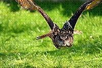 草の上を飛ぶフクロウ-大人のための1000ピースのジグソーパズル脳の挑戦のための子供大規模な教育知的ゲーム家の装飾-50cmx75cm