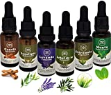 Set de 6 Aceites Esenciales selectos - Aromaterapia - difusor - masaje - concentrados 20ml c/u - Hecho en México | Canela, Eucalipto, Lavanda, Árbol de Té, Citronela, Menta.