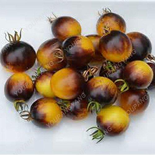 100pcs / sac rare graines de poivron rouge tomate Graines Bonsai légumes sains Heirloom biologiques et les graines de fruits pour la maison Chocolat Jardin