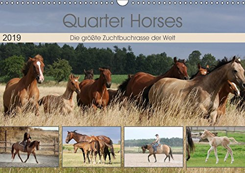 Quarter Horses - Die größte Zuchtbuchrasse der Welt (Wandkalender 2019 DIN A3 quer): Quarter Horses Pferdezucht, Wandkalender mit 12 verschiedenen Fotos (Monatskalender, 14 Seiten ) (CALVENDO Tiere)