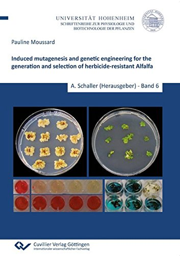 Induced mutagenesis and genetic engineering for the generation and selection of herbicide-resistant Alfalfa (Physiologie und Biotechnologie der Pflanzen)