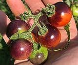 Blue Berries Blueberries Cherry Heirloom Tomato Premium Seed Packet