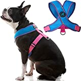 GOOBY - Comfort X Head-in Harness V2, Small Dog Harness with Patented Choke...
