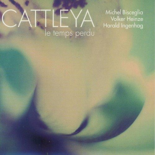 Tango Cattleya