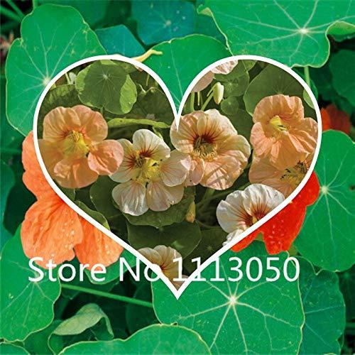 Multi-Colored : 100Pcs Perennial Nasturtium Seeds World Hottest Flower Seeds Garden Bonsai Seeds Mix Colors