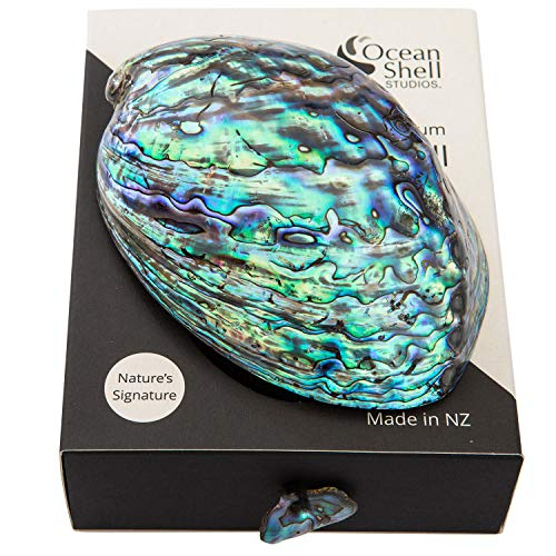Ocean Shell Studios. Polished Abalone Shell in Gift Box, 100% Natural Shell for Smudging, Cleansing, Meditation, Home Décor and to Gift.