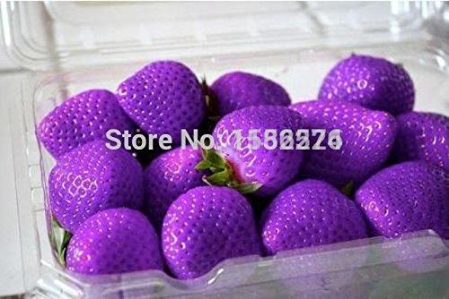 100pcs 100% authentiques frais rares Graines pourpre fraises - légumes bonsaï fleurs de fruits de la plante des graines