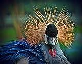 Rompecabezas de madera para adultos 1000 piezas, grúa coronada gris pájaro animal niños Tangram rompecabezas ocio juego creativo rompecabezas de juguete