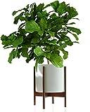 Fox & Fern Mid-Century Modern Plant Stand - Acacia - EXCLUDING 12' White Ceramic Plant Pot