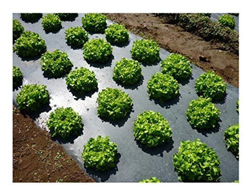 Grower's Solution Black Plastic Mulch 4ft. X 100ft. 1.0 Mil Embossed