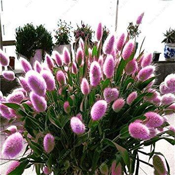 VISTARIC 21: Seltene Bonsai Kürbiskerne Cucurbita Golddraht Kürbis Garten Gewächshaus Bio-Gemüsesamen Geeignet für Kochen 20 PC/Beutel 21
