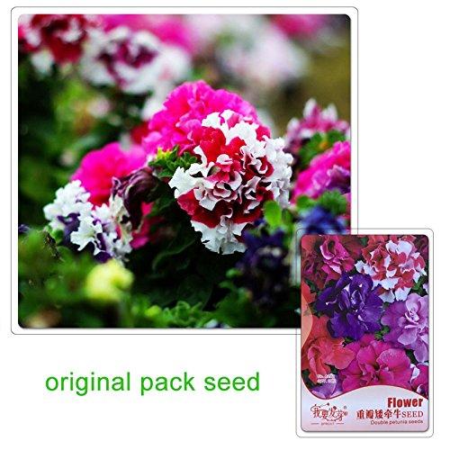 10 Graines/Paquet Graines de fleurs Balcon Plante en pot Double Petunia Graines
