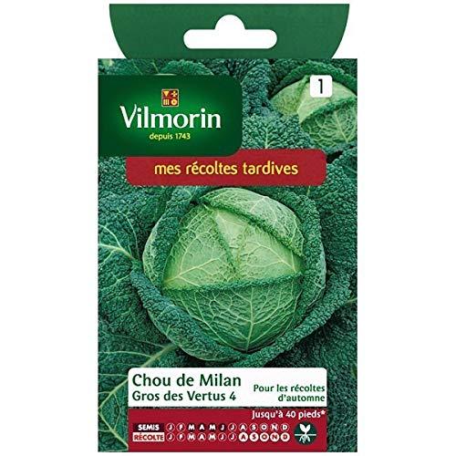 Vilmorin - Sachet graines Chou de milan gros des vertus 4