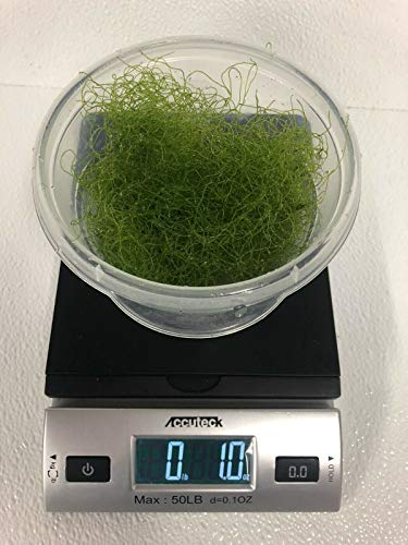 Live Saltwater Plant CHAETOMORPHA Macro Algae 1 OZ / 2 Cups Chaeto Refugium with Live Copepods and Amphipods - 2 Cups