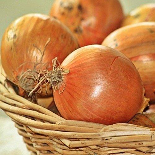 Cipolla dorata di Parma (Semente)