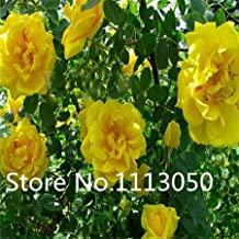 Best polyantha roses for sale Reviews