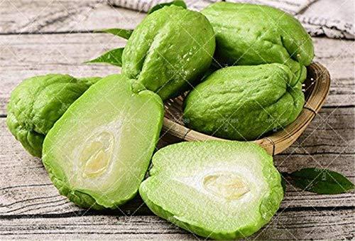 10個おいしいハヤトウリ盆栽ベジタブルガーデン盆栽高栄養パンプキンハッピーファーム年次健康野菜植物