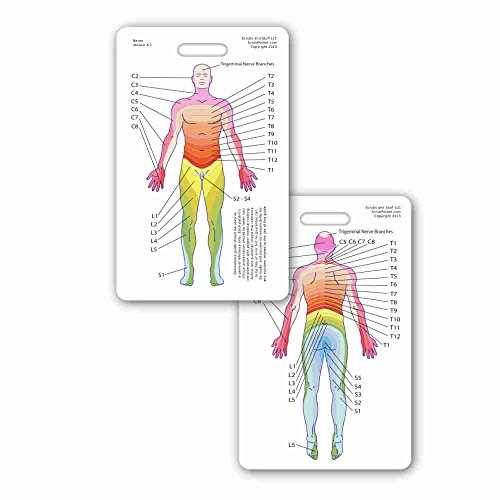 Neuro Dermatome Diagram Vertical Badge ID Card Pocket Reference Guide Neurology (1 Card)