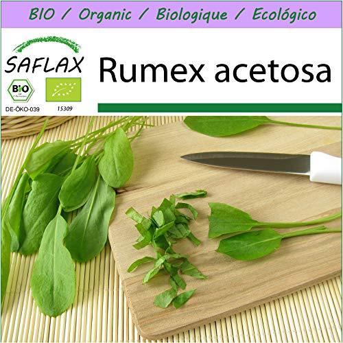 SAFLAX - BIO - Oseille commune - 400 graines - Rumex acetosa