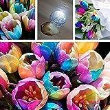 Zoom IMG-1 cioler seme di fiore 100pcs
