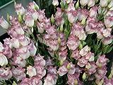 Calientes 2017 nuevos de la llegada de 50 PC / paquete Semillas Lisianthus 25 colores Semillas colección de bonsáis lisianthus de flores para jardín 13